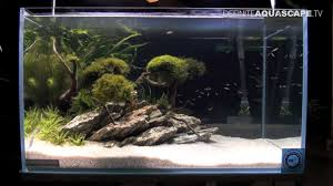 Aquascaping - Aquarium Ideas From ZooBotanica 2013, Pt.6 - YouTube Photo Planted Axolotl Aquascape Tank Caudataorg Suitable Plants Aqua Rebell Tutorial Natures Chaos By James Findley The Making Aquascaping Aquarium Ideas From Aquatics Live 2012 Part 4 Youtube October 2010 Of The Month Ikebana Aquascaping World Public Search Preserveio Need Some Advice On My Planned Aquascape Forum 100 Cave Aquariums And Photography Setup Seriesroot A Tree Animalia Kingdom Show My Our Lovely 28l Continuity Video Gallery Green 90p Iwagumi Rock Garden Page 8