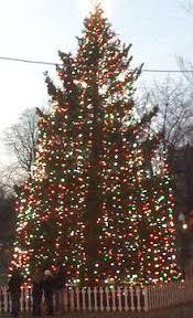 Tannenbaum Christmas Tree Farm Michigan by 2010 Boston Halifax Christmas Tree On Boston Common Usa 5273771973 Jpg