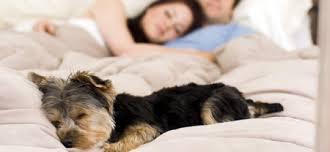sollten hunde mit im bett schlafen