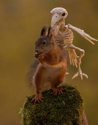 Countries That Dont Celebrate Halloween by Here U0027s How Squirrels Celebrate Halloween Bored Panda