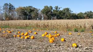 Faulkner Pumpkin Patch by Welcome To District Jamestown Public Schools