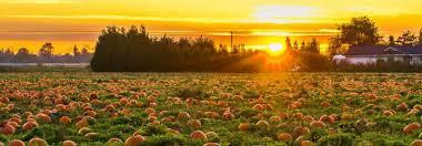 Pumpkin Picking Nj by Pumpkin Patch During Sunset In Bergen County Nj B Jpg