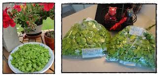 comment cuisiner les f es fraiches congélation des fèves 7 juin 2012 la guillaumette