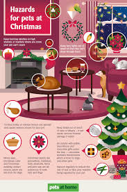 Are Christmas Trees Poisonous To Dogs Uk by Christmas Hazards In The Home Dogs Monthly