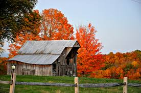 Barn, Fall, Home Decor, Fence, Orange, Vintage, Vibrant, Color ... Xlentcrap Barns Flowers Stuff 2009 In Vermont The Fall Stock Photo Royalty Free Image A New England Barn Fall Foliage Sigh Farms And Fecyrmbarnactorewmailpouchfallfoliagetrees Is A Perfect Time For Drive To See National Barn Five Converted Rent This Itll Make You See Red Or Not Warming Could Dull Tree Dairy Cows Grazing Pasture With Dairy Barns Michigan Churches Mills Covered Mike Of Nipmoose Engagement Beauty Pa Leela Fish Rustic Winter Scene Themes Summer Houses Decorations