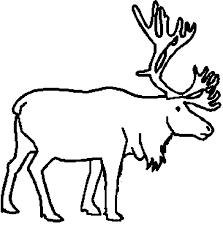 29 Best Iditarod Images On Pinterest