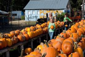 Southern Illinois Pumpkin Patches by The Best Pumpkin Patches In America Jetlaggin