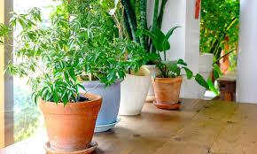 pflegeleichte zimmerpflanzen standort und tipps das haus
