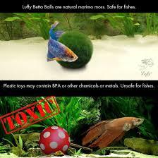 Homemade Lava Lamp Fish Tank by Amazon Com Luffy Betta Balls Live Marimo Plants Natural Toys