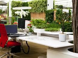 plante de bureau aménagement de plantes d intérieur pour le bureau de travail