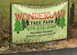 Christmas Tree Shop Fayetteville Nc by Wonderland Christmas Tree Farm Only In Arkansas