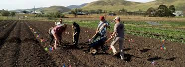 Cal Poly Pumpkin Patch 2016 by About Cal Poly Organic Farm Horticulture U0026 Crop Science Cal
