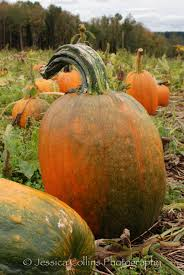 Spooky Pumpkin Patch Fort Collins by Jessica Collins Photography Every Pumpkin Is Beautiful