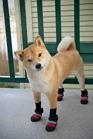 112 best shiba inu images on shiba inu doge and akita