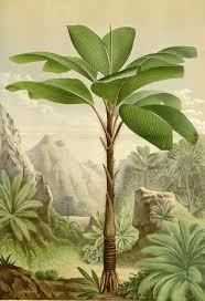 papier peint sp ial cuisine 29 best wand images on botanical botanical drawings