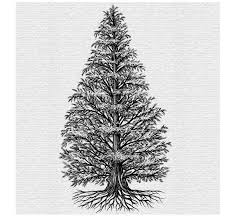 Menards Christmas Trees White by The Tree Illustration Collection By Steven Noble On Behance