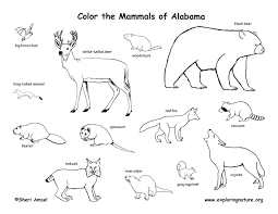 Coloring Mammals Of This State