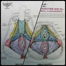 Bodyconscious Make A Photo Gallery Kapit Anatomy Coloring Book