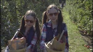 Pumpkin Patch Bellingham Wa by Bellewood Acres Apple Orchard Bellingham Lynden Wa Youtube