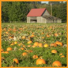 Hunter Farms Pumpkin Patch Olympia Wa by Fall Activities In Olympia Pumpkin Patches Apple Festivals