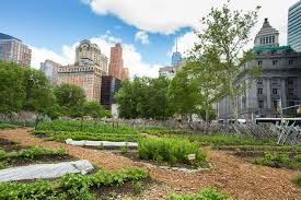 Bed Stuy Campaign Against Hunger by Visit A Farm This Summer Jetblue U0027s T5 Farm At Jfk And Morenyc
