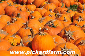 Pumpkin Patch Massachusetts by Littleton Massachusetts Pyo Pumpkin Patch Pictures 2010