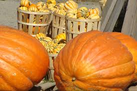 Pumpkin Patch Petting Zoo Illinois by Best Nj Pumpkin Patches Hayrides Corn Mazes For 2016