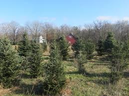 Christmas Tree Farms Albany Ny by Using Money U2013 Ridinkulous