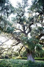 Crab Pot Christmas Trees Wilmington Nc by Best 25 Coastal North Carolina Ideas On Pinterest North