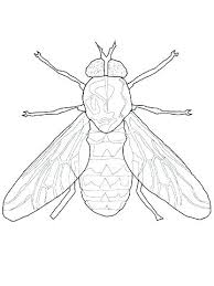 Dragonfly Coloring Page Preschool Wonderful Fly For Your Pages