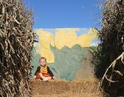 Free Pumpkin Patch Charleston Sc by Guide To Pumpkin Patches Around Columbia Columbia Sc Moms Blog
