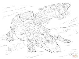Click The Two American Alligators Coloring Pages To View Printable