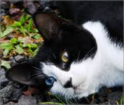 popular cat names 20 most popular tuxedo cat names we re all about the cats