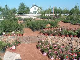 Pumpkin Patch Near Des Moines Iowa by Landscaping Contractors Earlham Ia Timber Pine Nursery And Green