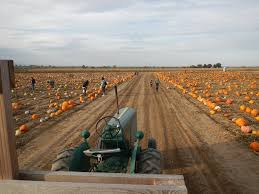 Pumpkin Patch Denver by 5 Great Pumpkin Patches Around Denver To Visit This Fall