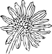 Back Of A Sunflower Flower Coloring Page
