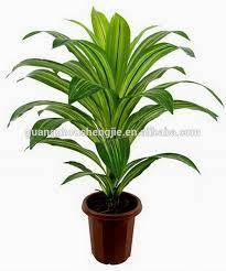 plantes vertes d interieur grossiste plante verte d intérieur acheter les meilleurs plante