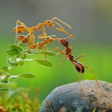 home reme s to rid of ants