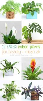 Indoor Plants No Light Home interiror and exteriro design