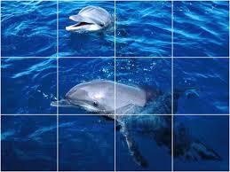 dolphin photo kitchen bathroom tile mural 1473 style
