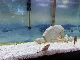 Star Wars Fish Tank Decorations by Hoth Themed Aquarium Aquariums