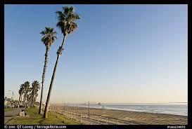 Tall Palm Trees Waterfront Promenade And Beach Huntington Orange County California USA