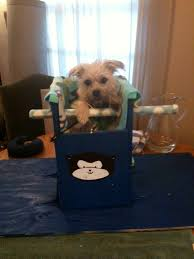 Bailey Chair Megaesophagus Instructions by 9 Best Buggs Images On Pinterest Dog Stuff Animals And Big Dogs