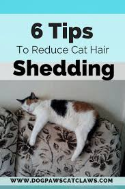 Excessive Hair Shedding In Cats by 14 Best Skin And Coat Supplements Images On Pinterest Dog