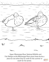 Click The Ducks Coloring Pages To View Printable Version Or Color It Online Compatible With IPad And Android Tablets