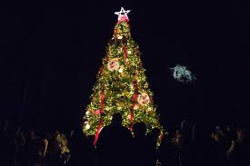 Pinecrest Christmas Tree Farm by The Pilot Sara Corce Visuals