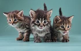 popular cat names most popular cat names of 2014 popsugar pets