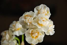 laurie bridal crown daffodils