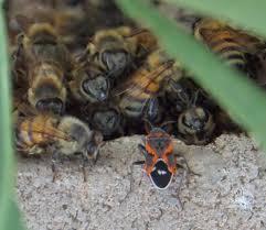 organic yardens arizona apiary laws