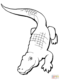Click The Realistic Alligator Coloring Pages To View Printable